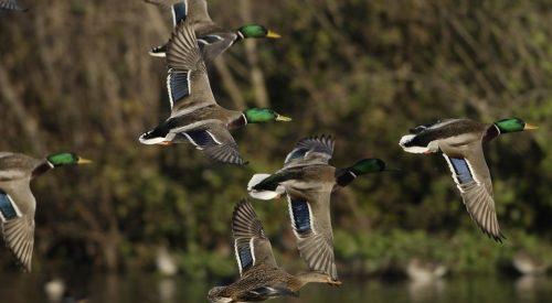 Hunting & Fishing Regulations